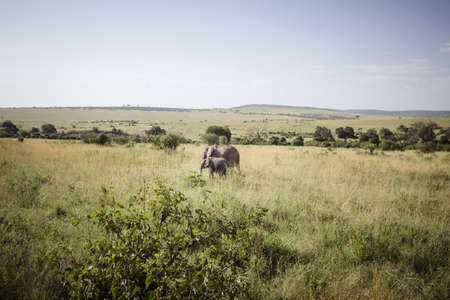 savana: A mother and baby elephant on the african savanna Stock Photo