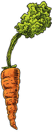 cartoon carrot: A fresh, orange, cartoon carrot Stock Photo