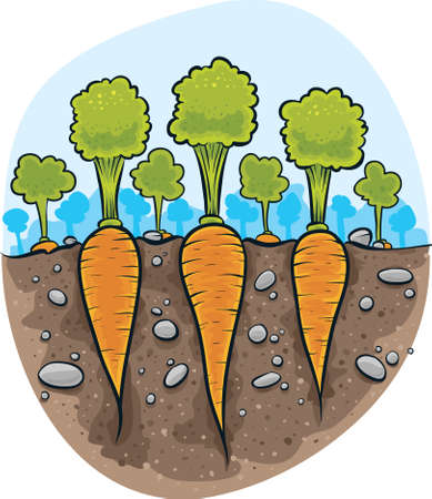 Cartoon cross-section of the ground revealing fresh carrots.