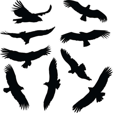 andean condor: Collection of condor silhouettes, in flight  Stock Photo