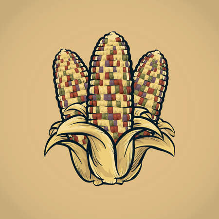 festive: Festive, colorful autumn corn cobs.