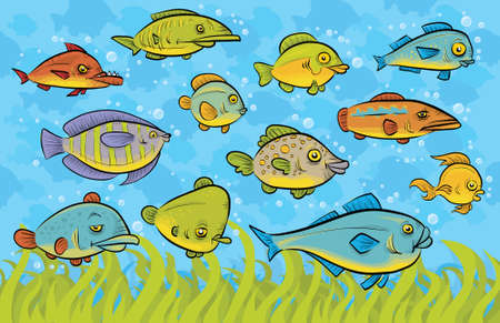 school of fish: A variety of swimming fish underwater.