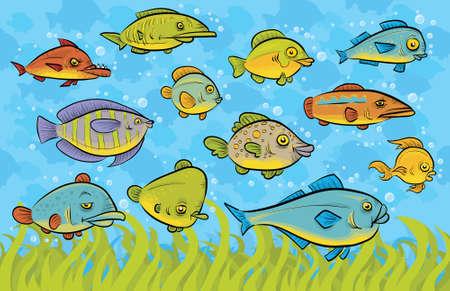 variety: A variety of swimming fish underwater.