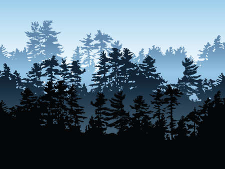 evergreen forest: Silhouette of an evergreen forest.