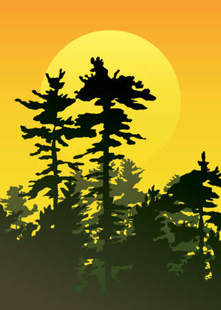 pine tree silhouette: A pine forest at sunset. Illustration