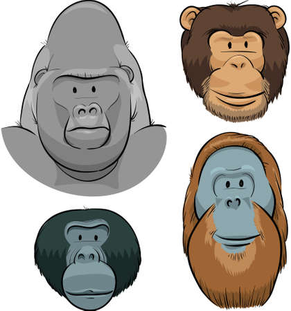 silverback: A set of cartoon faces of the Great Apes  Gorilla, Chimpanzee, Orangutan and Bonobo