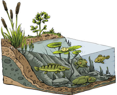 chunk: Cartoon cross-section of the shoreline of a pond. Illustration
