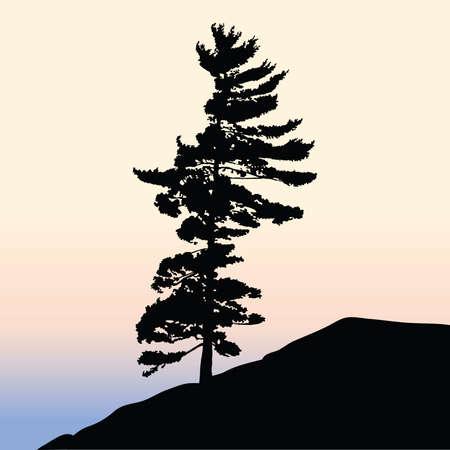 A lone pine tree silhouette on a hill. Ilustração