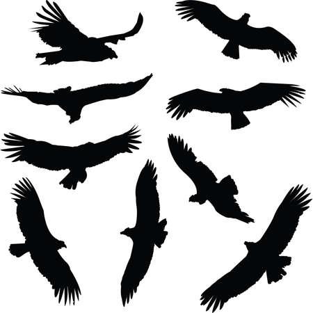 andean condor: Collection of condor silhouettes, in flight.