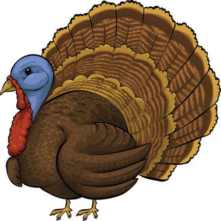 A plump, cartoon turkey bird. Vector