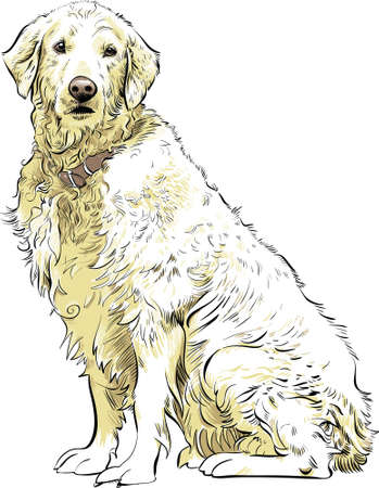 cartoon dog: A noble Golden Retriever sitting.