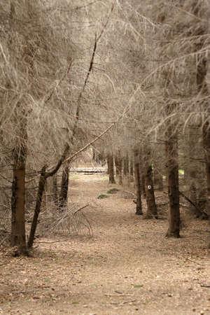 southeastern: Fields, Mountains, Autumn Landscape