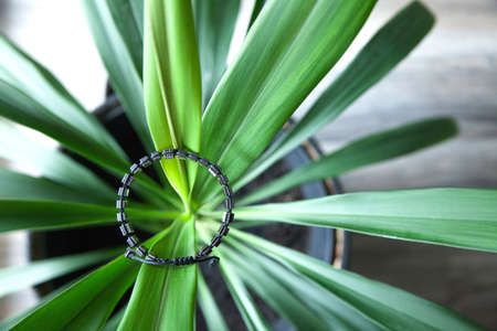 Beautiful bracelet made of black stones and silver on a yucca plant. Stock Photo