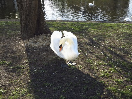front of: Swan front