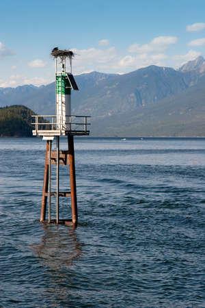 Adlers Nest auf Leuchtturm in Mitte der See