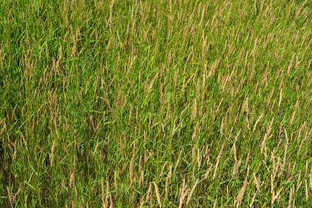Generic background of wild grass meadow Stock Photo