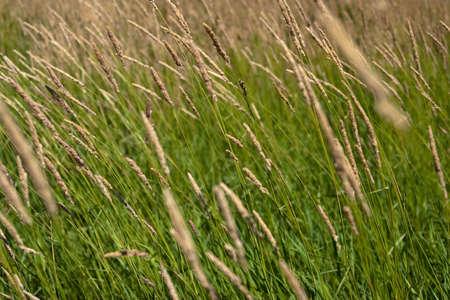 Nahaufnahme eines Felds des Wildes Gras Lizenzfreie Bilder