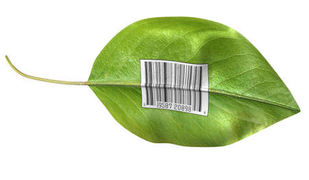 Bright green leaf with barcode on side against white background Stock Photo