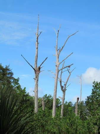 nieużytki: Barren trees Zdjęcie Seryjne