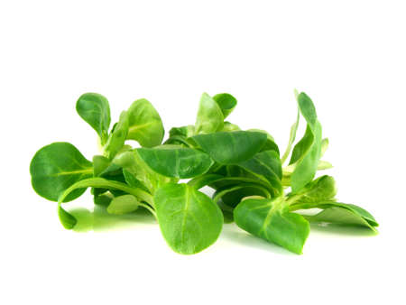 Valerianella locusta, corn salad, lambs lettuce isolated on white background