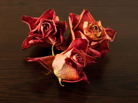 Dried roses on the table of dark wood  Dry flowers collection  photo