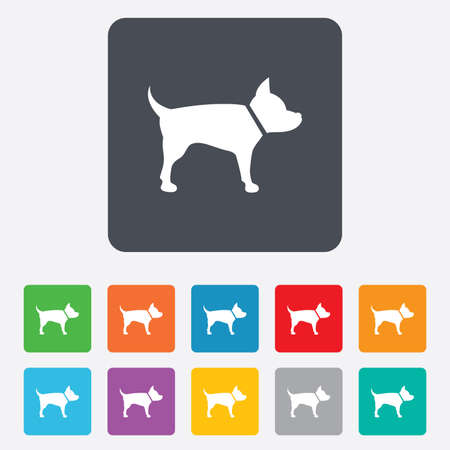 dog allowed: Dog sign icon. Pets symbol. Rounded squares 11 buttons. Vector Illustration