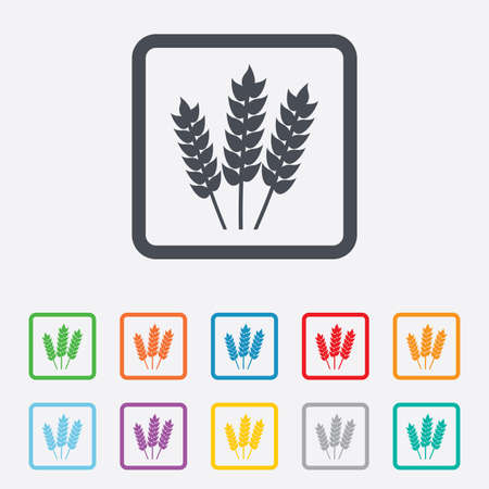 Agricultural sign icon. Gluten free or No gluten symbol. Round squares buttons with frame. Vector Vector