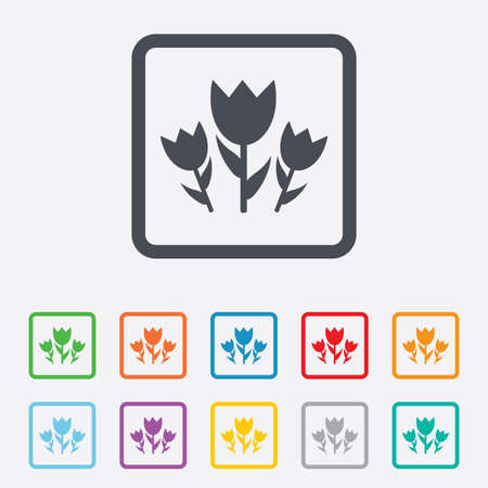 Flowers sign icon. Roses symbol. Bouquet. Round squares buttons with frame. Vector Vector