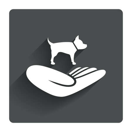 animal shelter: Shelter pets sign icon. Hand holds dog symbol. Animal protection. Gray flat square button with shadow. Modern UI website navigation. Vector Illustration