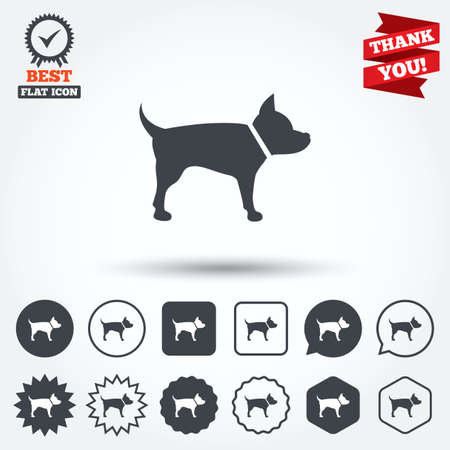 dog allowed: Dog sign icon. Pets symbol. Circle, star, speech bubble and square buttons. Award medal with check mark. Thank you ribbon. Vector Illustration
