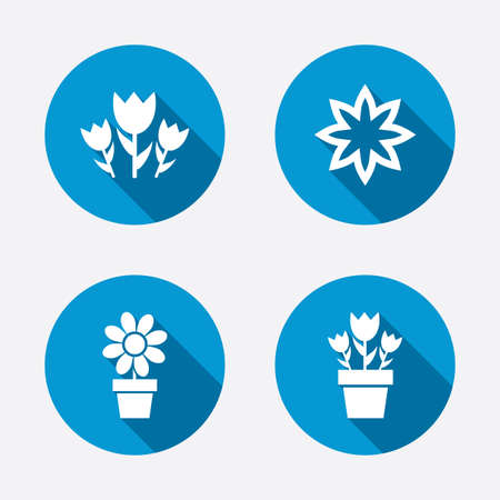 camomiles macro: Flowers icons. Bouquet of roses symbol. Flower with petals and leaves in a pot. Circle concept web buttons. Vector