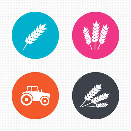 of agriculture: Circle buttons. Agricultural icons. Wheat corn or Gluten free signs symbols. Tractor machinery. Seamless squares texture. Vector