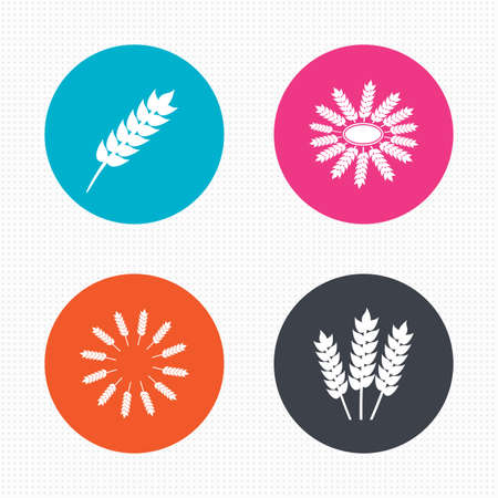 corn stalk: Circle buttons. Agricultural icons. Gluten free or No gluten signs. Wreath of Wheat corn symbol. Seamless squares texture. Vector