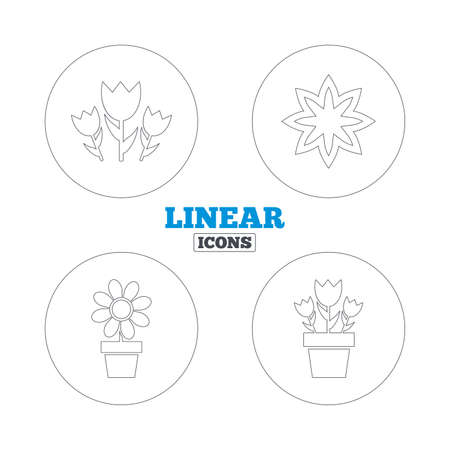 camomiles macro: Flowers icons. Bouquet of roses symbol. Flower with petals and leaves in a pot. Linear outline web icons. Vector Illustration