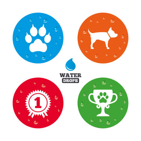 clutches: Water drops on button. Pets icons. Cat paw with clutches sign. Winner cup and medal symbol. Dog silhouette. Realistic pure raindrops on circles. Vector