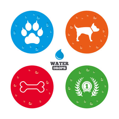 clutches: Water drops on button. Pets icons. Cat paw with clutches sign. Winner laurel wreath and medal symbol. Pets food. Realistic pure raindrops on circles. Vector