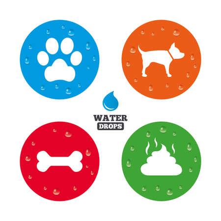 feces: Water drops on button. Pets icons. Dog paw and feces signs. Clean up after pets. Pets food. Realistic pure raindrops on circles. Vector