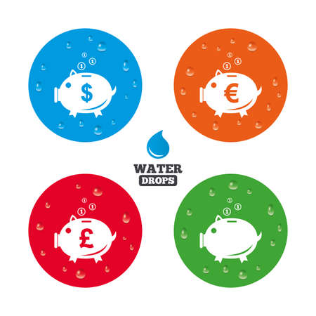 pound coin: Water drops on button. Piggy bank icons. Dollar, Euro and Pound moneybox signs. Cash coin money symbols. Realistic pure raindrops on circles. Vector