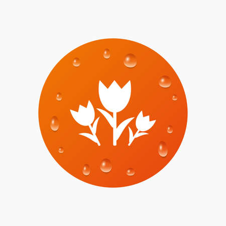 kropla deszczu: Water drops on button. Flowers sign icon. Roses symbol. Bouquet. Realistic pure raindrops. Orange circle. Vector