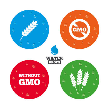 genetically modified crops: Water drops on button. Agricultural icons. Gluten free or No gluten signs. Without Genetically modified food symbols. Realistic pure raindrops on circles. Vector