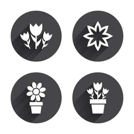 camomiles macro: Flowers icons. Bouquet of roses symbol. Flower with petals and leaves in a pot. Circles buttons with long flat shadow. Vector