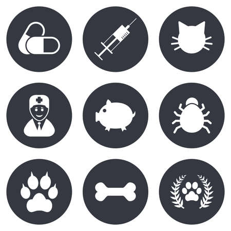 cat suit: Veterinary, pets icons. Paw, syringe and bone signs. Pills, cat and doctor symbols. Gray flat circle buttons. Vector