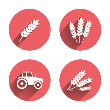 agriculture symbol: Agricultural icons. Wheat corn or Gluten free signs symbols. Tractor machinery. Pink circles flat buttons with shadow. Vector Illustration