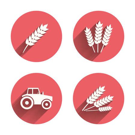 agricultura: Iconos agrícolas. maíz o gluten de trigo señales gratuitas símbolos. maquinaria tractor. círculos rosados ??botones planos con la sombra. Vector