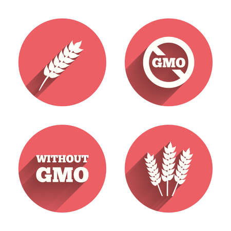 genetically modified crops: Agricultural icons. Gluten free or No gluten signs. Without Genetically modified food symbols. Pink circles flat buttons with shadow.