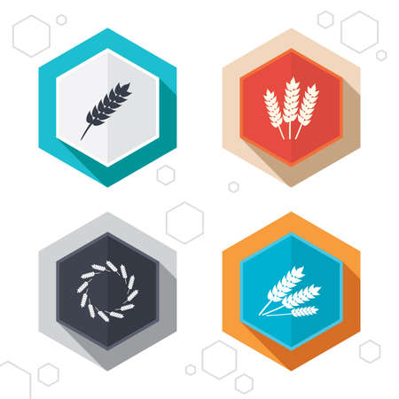 corn stalk: Hexagon buttons. Agricultural icons. Gluten free or No gluten signs. Wreath of Wheat corn symbol. Labels with shadow. Vector Illustration