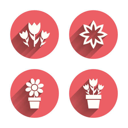 camomiles macro: Flowers icons. Bouquet of roses symbol. Flower with petals and leaves in a pot. Pink circles flat buttons with shadow. Vector
