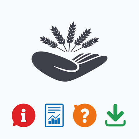 drought: Agriculture insurance sign icon. Hand holds wheat. Protection against crop failure and drought. Information think bubble, question mark, download and report. Illustration