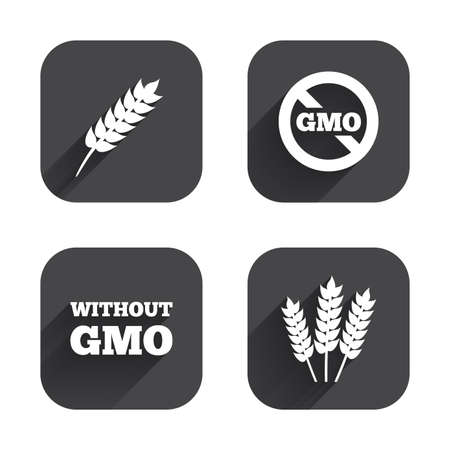 genetically modified crops: Agricultural icons. Gluten free or No gluten signs. Without Genetically modified food symbols. Square flat buttons with long shadow.