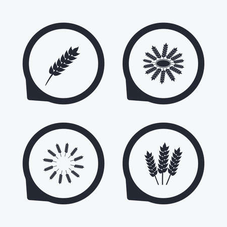 corn stalk: Agricultural icons. Gluten free or No gluten signs. Wreath of Wheat corn symbol. Flat icon pointers.
